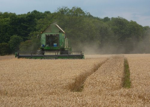 wheat_field_harvest_-_geograph.org.uk_-_1432901-7d273.jpg